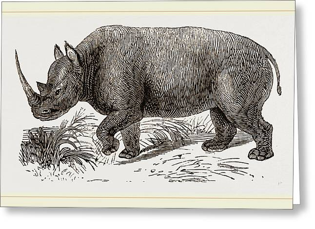 Two-horned Rhinoceros Greeting Card by Litz Collection