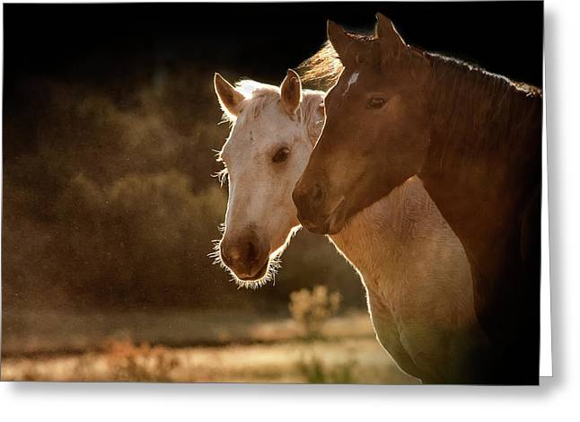 Two Horse Portraits In Soft Backlight Greeting Card by Sheila Haddad