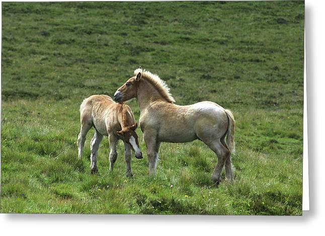 Two Horses Greeting Card by Bernard Jaubert