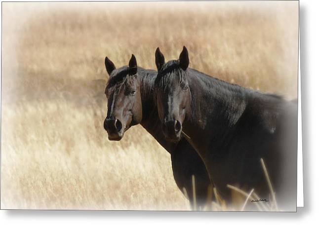 Two Horses Greeting Card by Ernie Echols