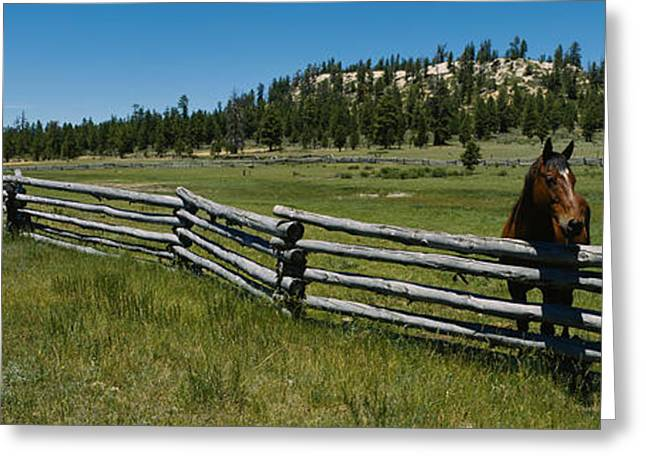 Two Horses In A Field, Arizona, Usa Greeting Card by Panoramic Images