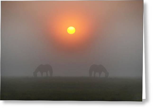 Two Horses In The Foggy Sun Greeting Card by Bill Cannon