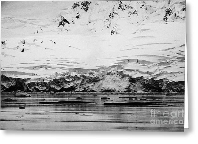 two humpback whales megaptera novaeangliae logging or sleeping in Fournier Bay Antarctica Greeting Card by Joe Fox