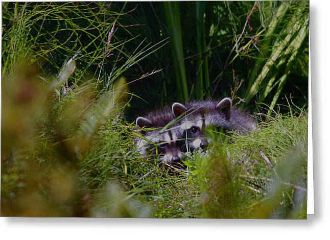 Two In The Bush  Greeting Card by Kym Backland