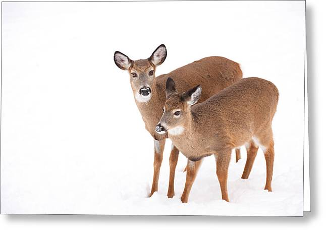 Two In The Snow Greeting Card by Karol Livote