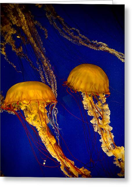 Two Jellyfish Greeting Card by Jessica Berlin