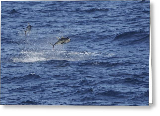 Two Jumping Yellowfin Tuna Greeting Card