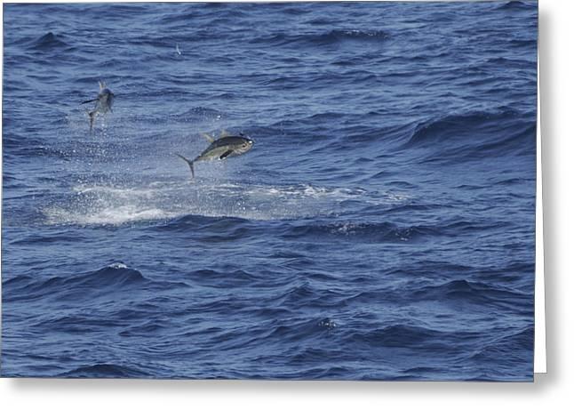 Two Jumping Yellowfin Tuna Greeting Card