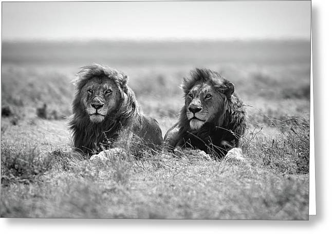 Two Kings Greeting Card