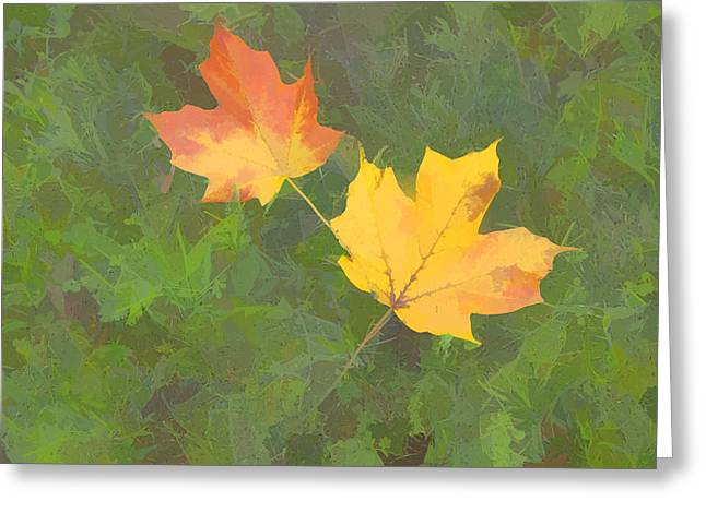 Two Leafs In Autumn Greeting Card by Indiana Zuckerman