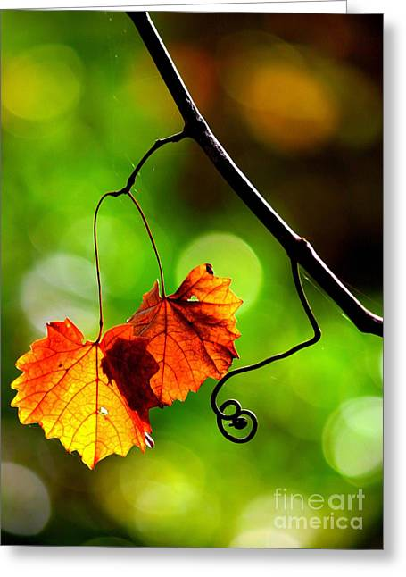 Two Leaves And A Curlicue Greeting Card by Carol Groenen