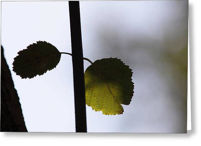 Two Leaves Greeting Card by Ulrich Kunst And Bettina Scheidulin