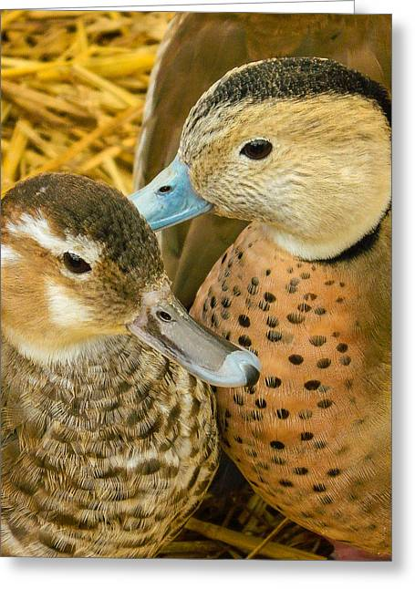 Two Little Ducks Greeting Card by Mair Hunt
