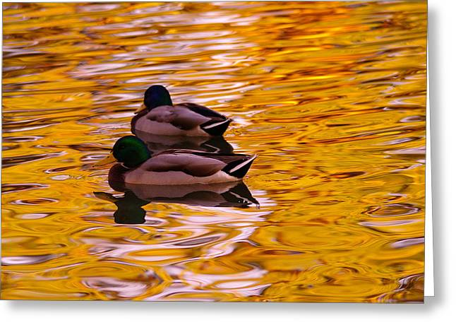 Two Mallards On Golden Water Greeting Card