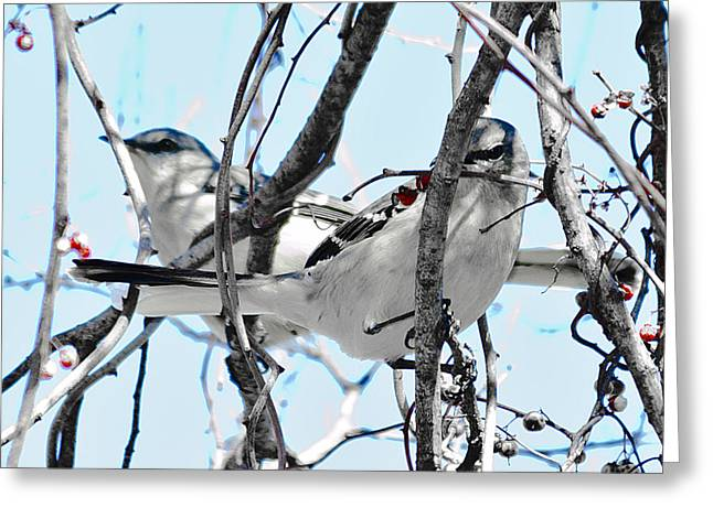 Two Mocking Birds Greeting Card