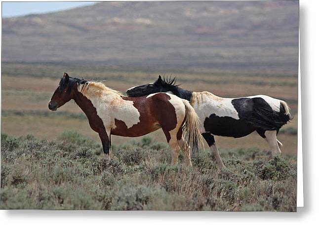 Two Mustangs In Wyoming Greeting Card