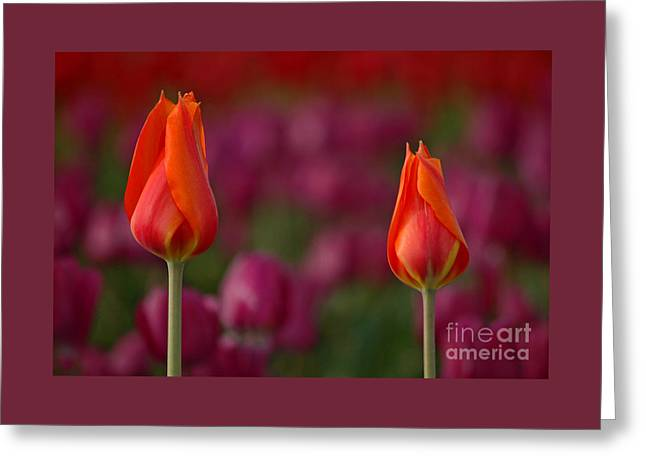 Greeting Card featuring the photograph Two Of A Kind by Nick  Boren