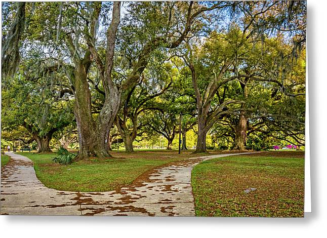 Two Paths Diverged In A Live Oak Wood...  Greeting Card by Steve Harrington