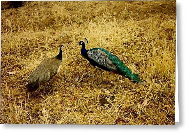 Two Peacocks Yaking Greeting Card by Amazing Photographs AKA Christian Wilson