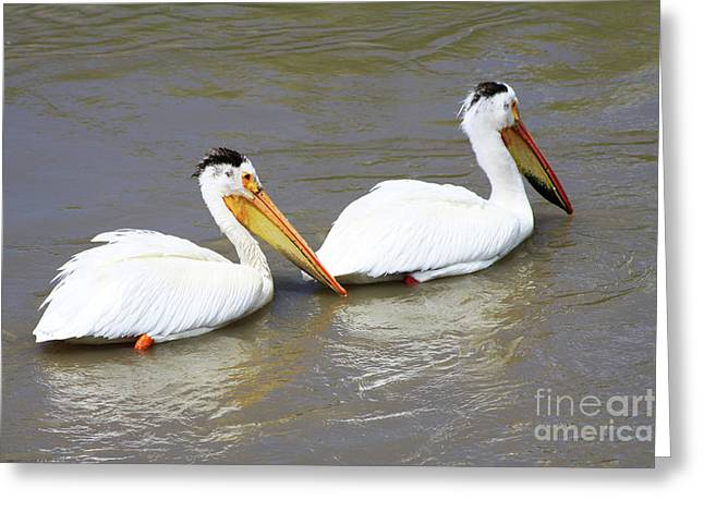 Greeting Card featuring the photograph Two Pelicans by Alyce Taylor