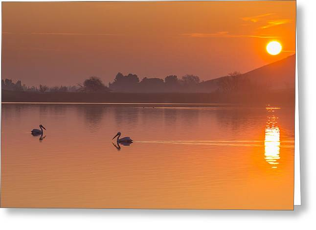 Two Pelicans At Sunrise Greeting Card