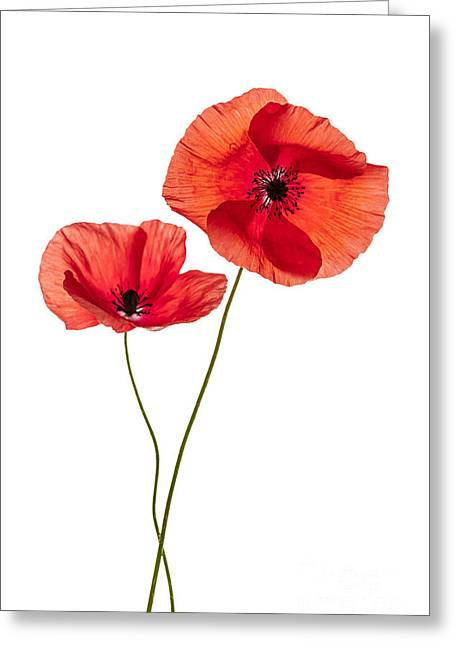 Two Poppy Flowers Greeting Card by Elena Elisseeva