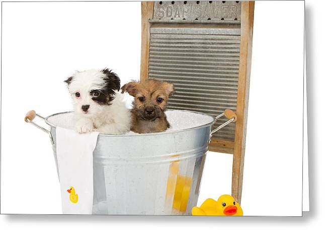 Two Puppies Taking A Bath Greeting Card by Susan Schmitz