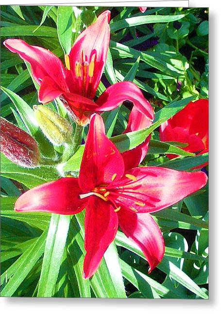 Two Red Flowers Greeting Card