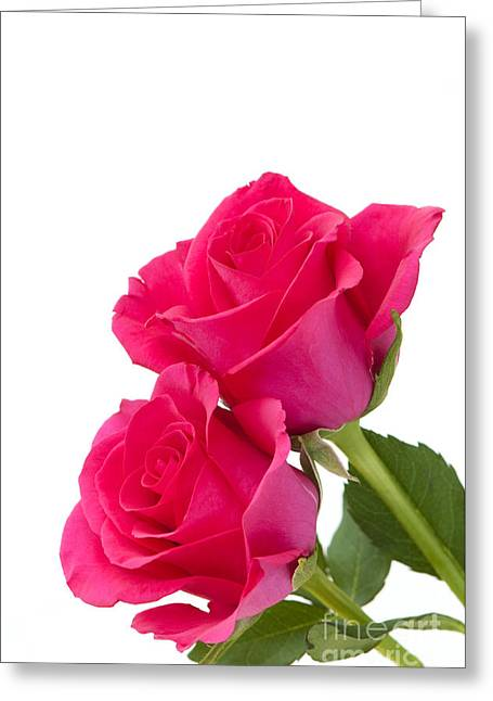 Two Roses Greeting Card by Anne Gilbert