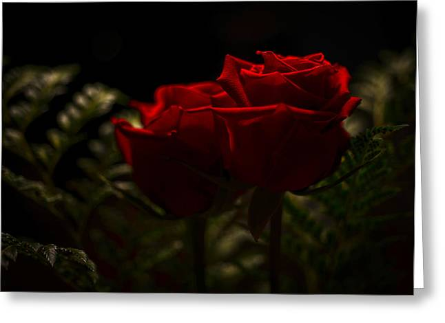 Two Roses For Our Anniversary Greeting Card by Ronda Broatch