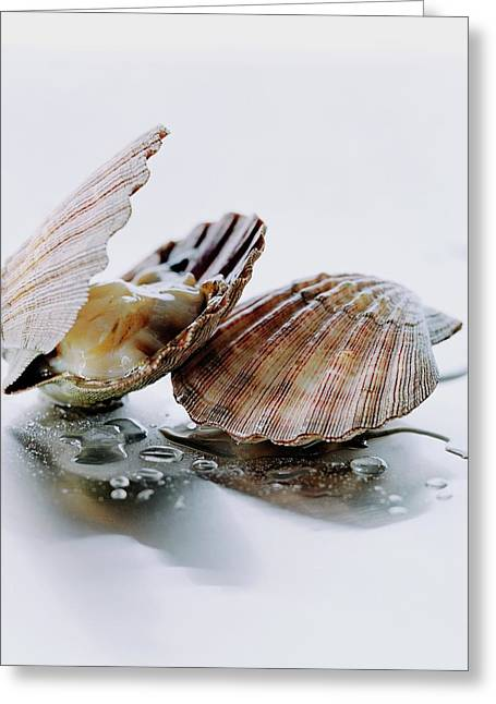Two Scallops Greeting Card