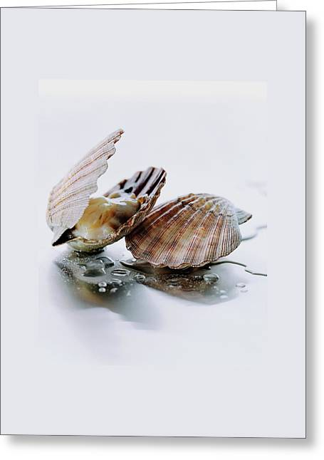 Two Scallops Greeting Card by Romulo Yanes
