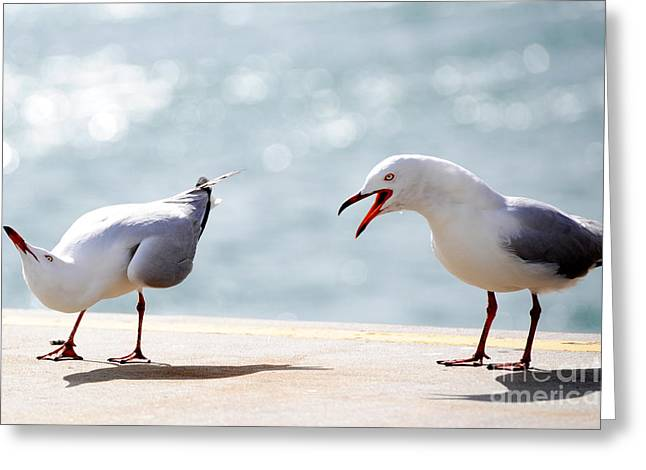 Two Seagulls Greeting Card