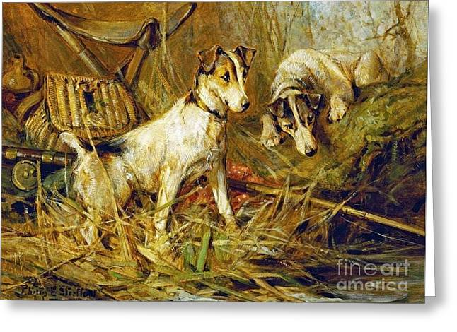 Two Smooth-haired Fox Terriers Greeting Card by Celestial Images