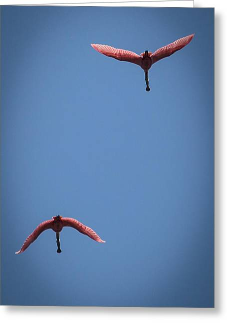 Two Spoonbills Overflying The Swamp Greeting Card