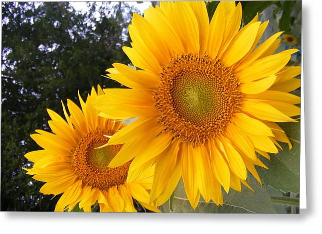 Two Sunflowers Greeting Card by Ashley Thompson