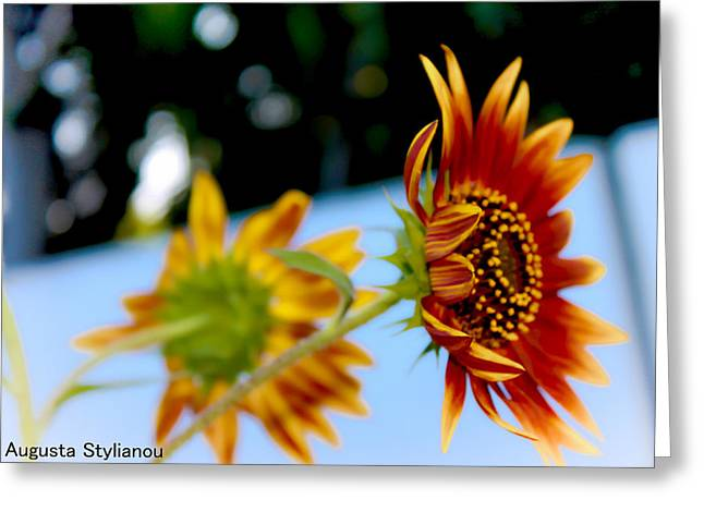 Two Sunflowers Greeting Card by Augusta Stylianou