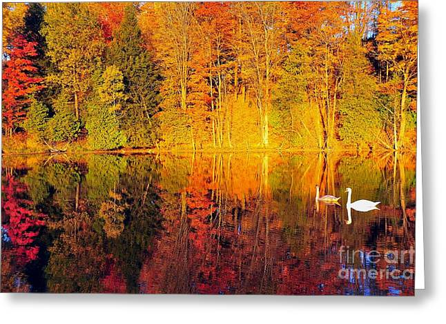 Two Swans A Swimming Greeting Card by Terri Gostola
