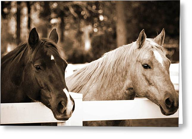 Two Sweet Horses Greeting Card