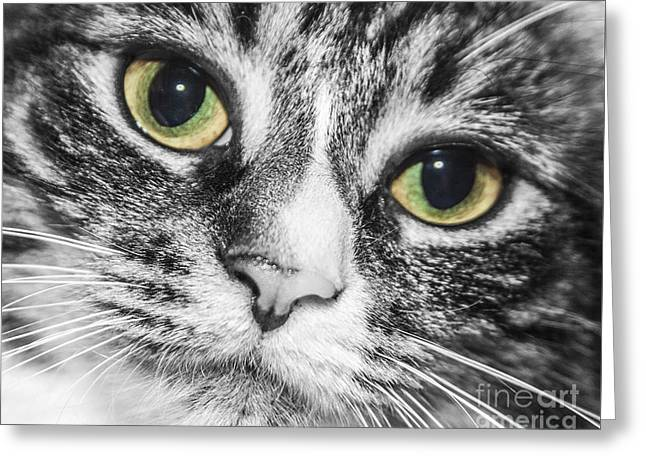 Two Toned Cat Eyes Greeting Card