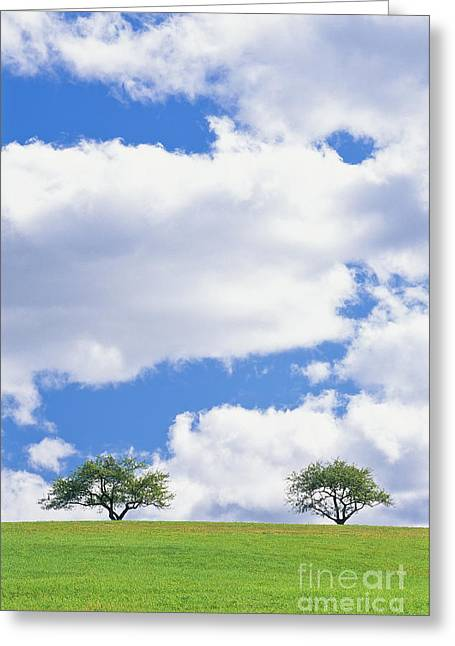Greeting Card featuring the photograph Two Trees by Alan L Graham