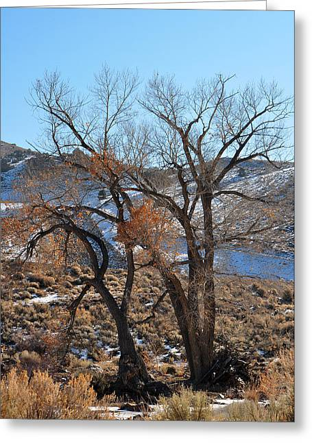 Two Trees In The Mountains Greeting Card by Lula Adams