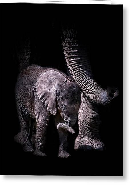 Two Trunks Greeting Card