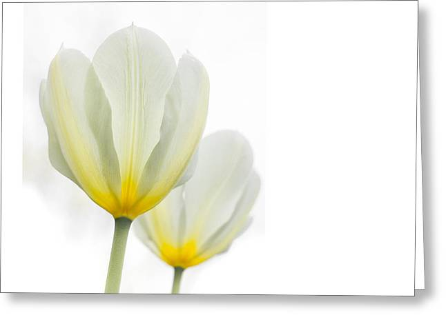 Two Tulips 1 Greeting Card