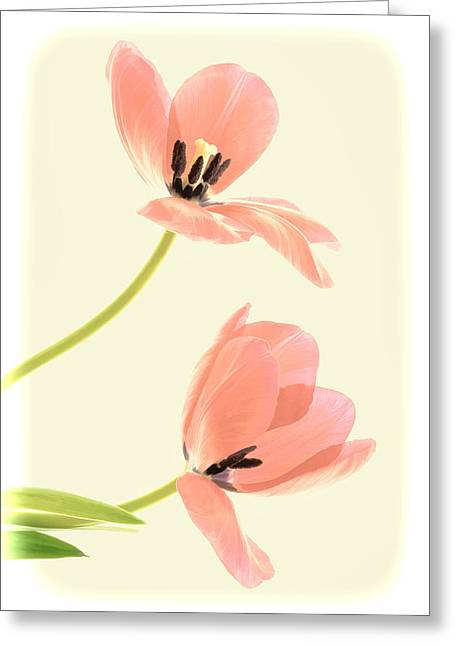 Two Tulips In Pink Transparency Greeting Card