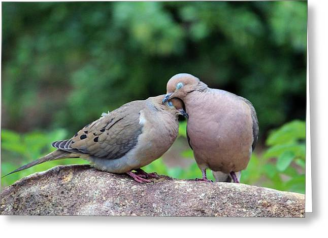 Two Turtle Doves Greeting Card by Cynthia Guinn