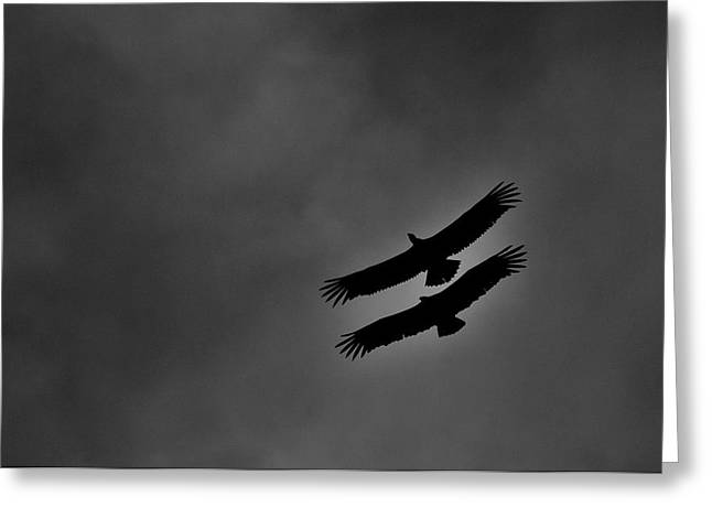 Two Vultures Greeting Card by Arturo Rosas