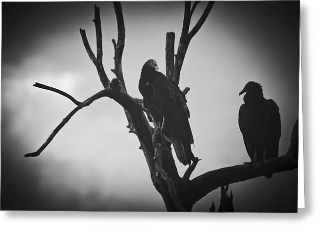 Two Vultures Greeting Card by Bradley R Youngberg