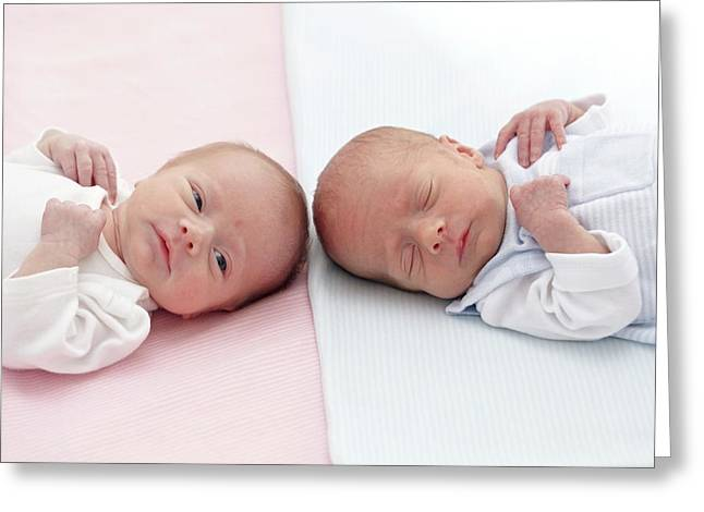 Two Week Old Twins Greeting Card