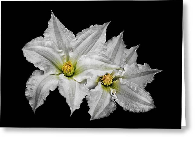 Two White Clematis Flowers On Black Greeting Card